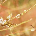 Квест «Инсектофобия» от контактного микро-зоопарка «Бугагашечка» в ТК «Миллер»