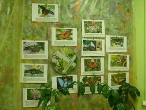 Выставка живых тропических бабочек и птиц Troides