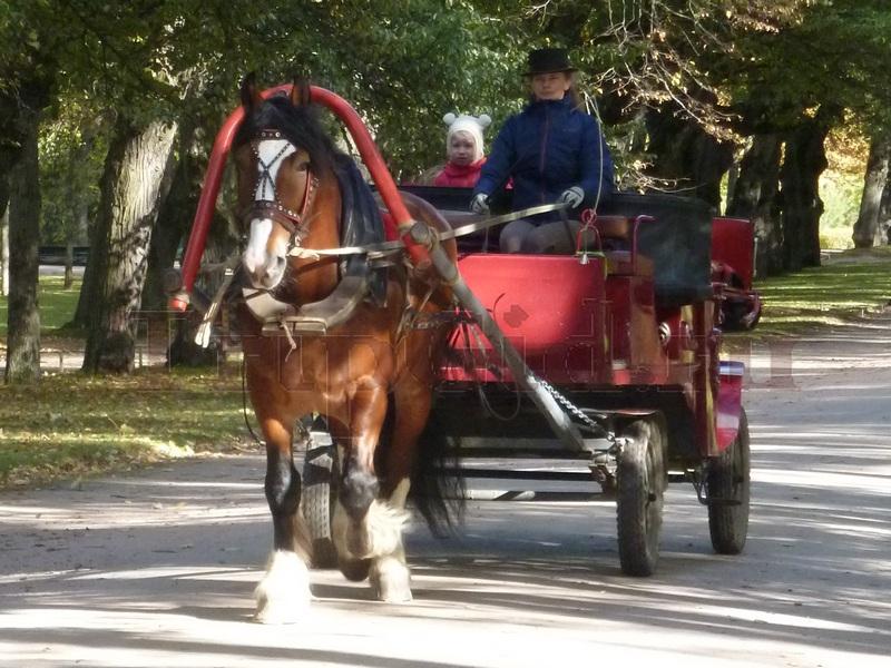 Прогулка на лошадях, Павловский парк, Павловск