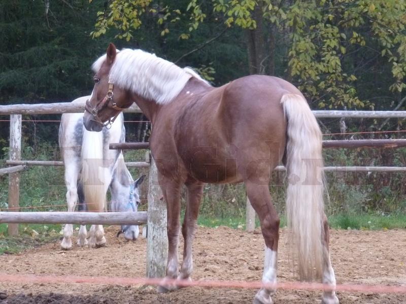 Лошадь, Зубровник в Токсово