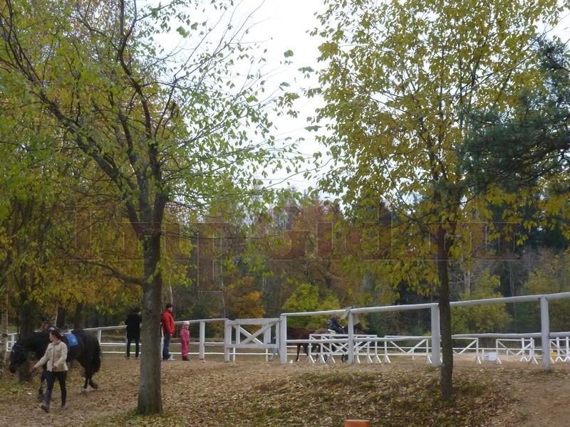 Площадка для вольтижировки, Зубровник в Токсово