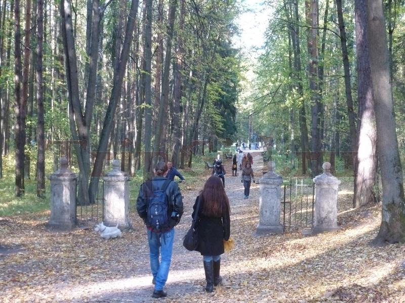 Старая Сильвия, Павловский парк, Павловск