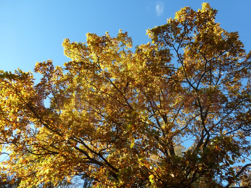 Осень в Павловском парке, Павловск