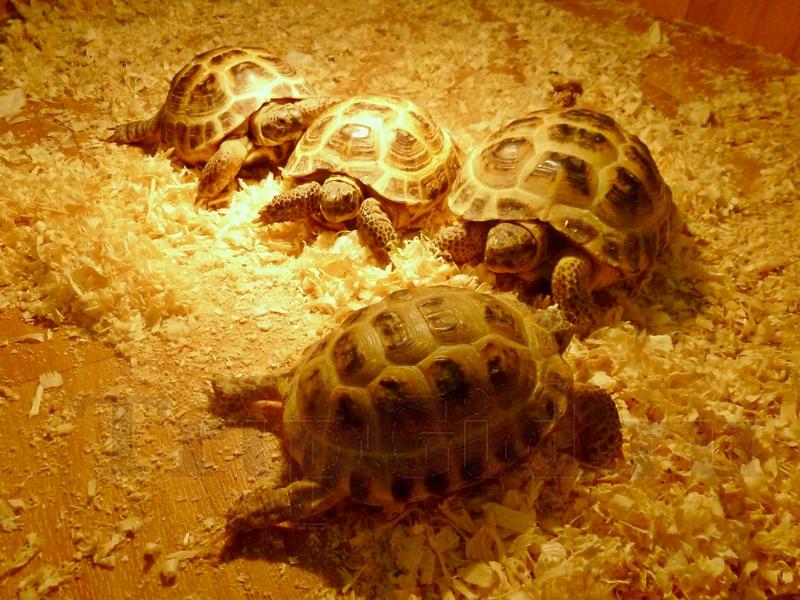 """Черепахи, Лесное Посольство, ТРЦ """"Монпансье"""""""