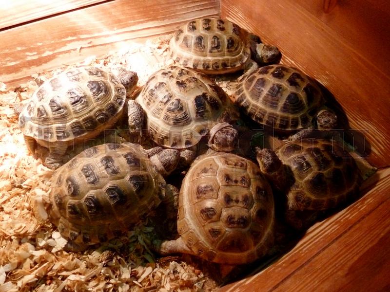 """Азиатские сухопутные черепахи, Трогательный зоопарк, ТРК """"Континент"""" на Байконурской"""