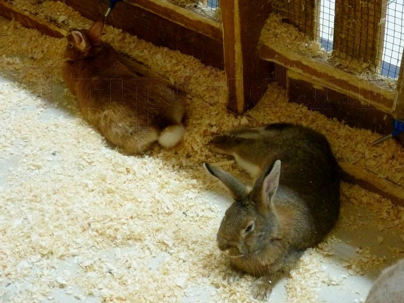"""Кролики, Трогательный зоопарк, ТРК """"Континент"""" на Байконурской"""