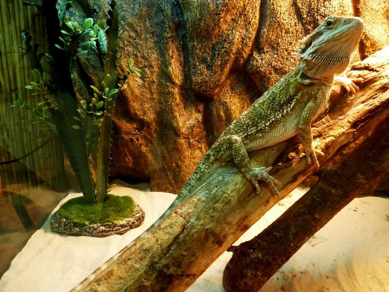 """Зелёная игуана, Трогательный зоопарк, ТРК """"Континент"""" на Байконурской"""