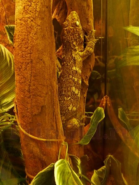 """Гигантский бананоед, Жизнь с холодной кровью, ТРК """"Гранд Каньон"""""""