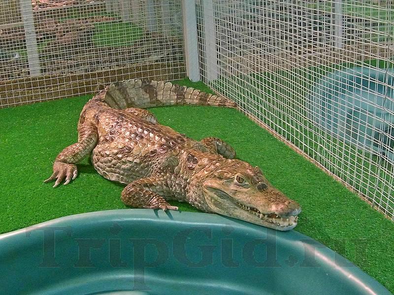 """Сиамский крокодил, Croco Park, ТРК """"Гулливер"""""""