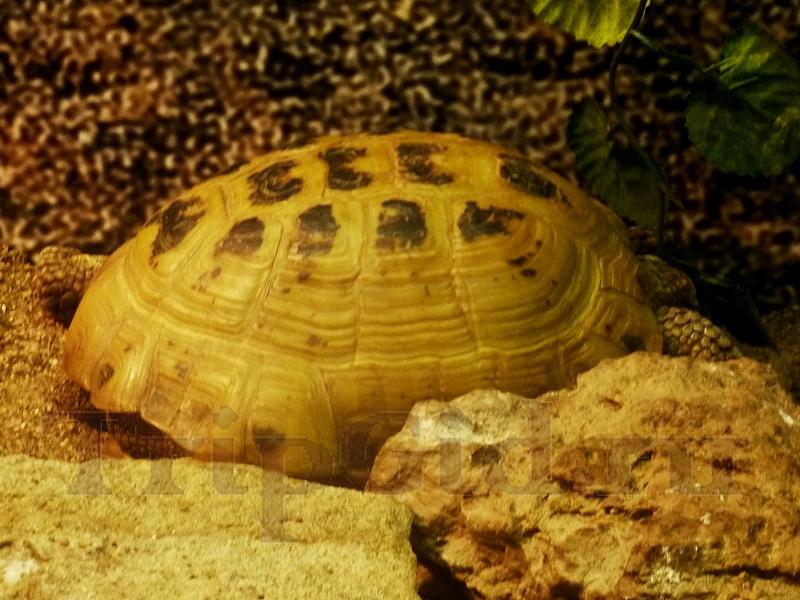 "Сухопутная черепаха, Croco Park, ТРК ""Гулливер"""