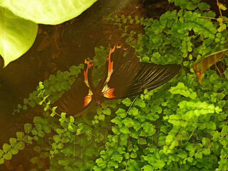 """Тропические бабочки, Жизнь с холодной кровью, ТРК """"Гранд Каньон"""""""