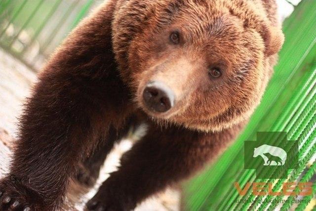 """Российский карантинный центр диких животных """"Велес"""", Рапполово"""