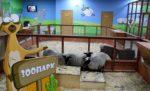 Контактный зоопарк Страна «ЕНОТиЯ» в ТРК «Гранд Каньон»